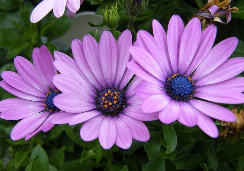 34 different types of purple flowers for your garden lavender different types of purple flowers meaning mightylinksfo