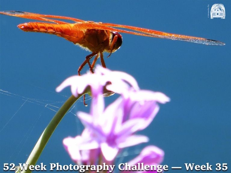 52 Week Photography Challenge—Week 35 Landscape: Nature Up Close