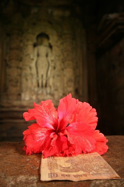 Ancient Story One Day In Ancient India The Buddha Was Giving A Teaching To His Followers On This Day However Instead Of A Ve Hibiscus Flowers Sacred Space