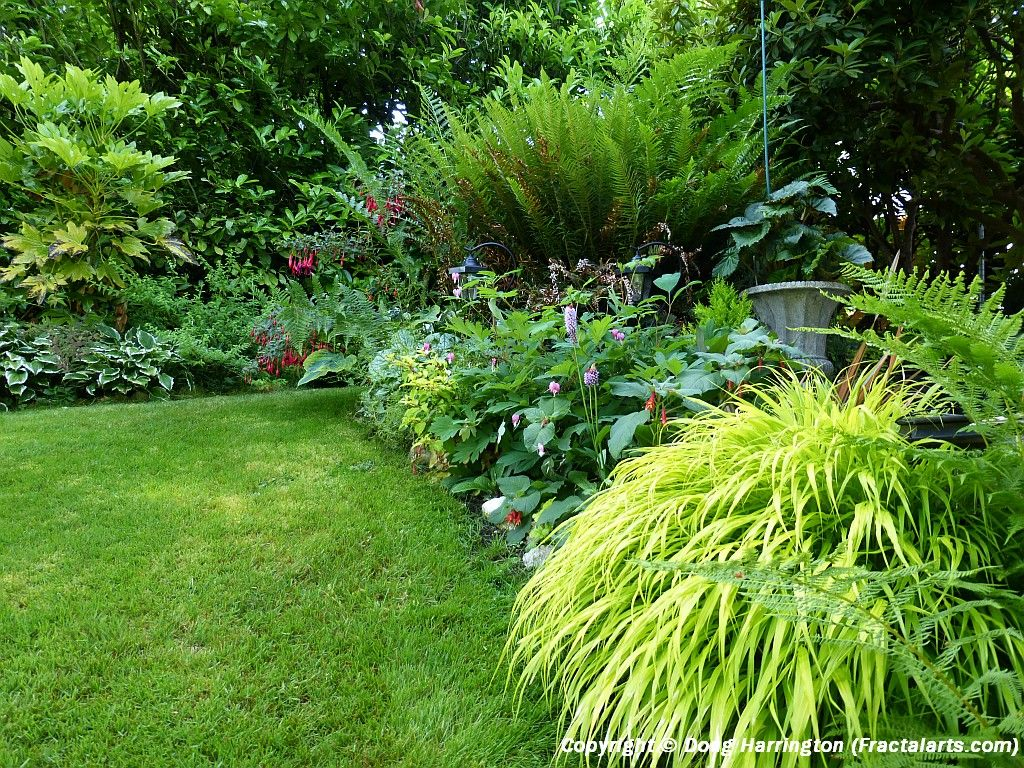 Light shade border plants in my garden | My Garden - Pacific NW ...