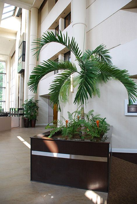 interior plants create a working atmosphere office increases with intierior plants office plants - Office Plants