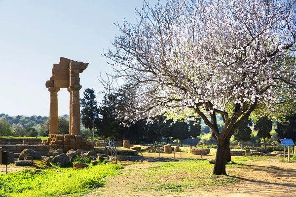 De tempels van Agrigento in het voorjaar, als de amandelbloesem bloeit