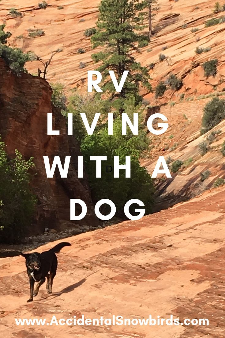 """You RV full time with a dog? -  I get people asking me often, """"What does RV living with a well-tr"""
