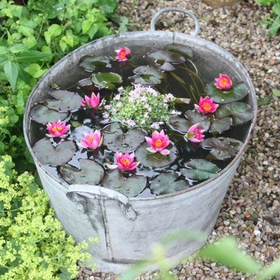 What container can I use to make a miniature pond in a pot