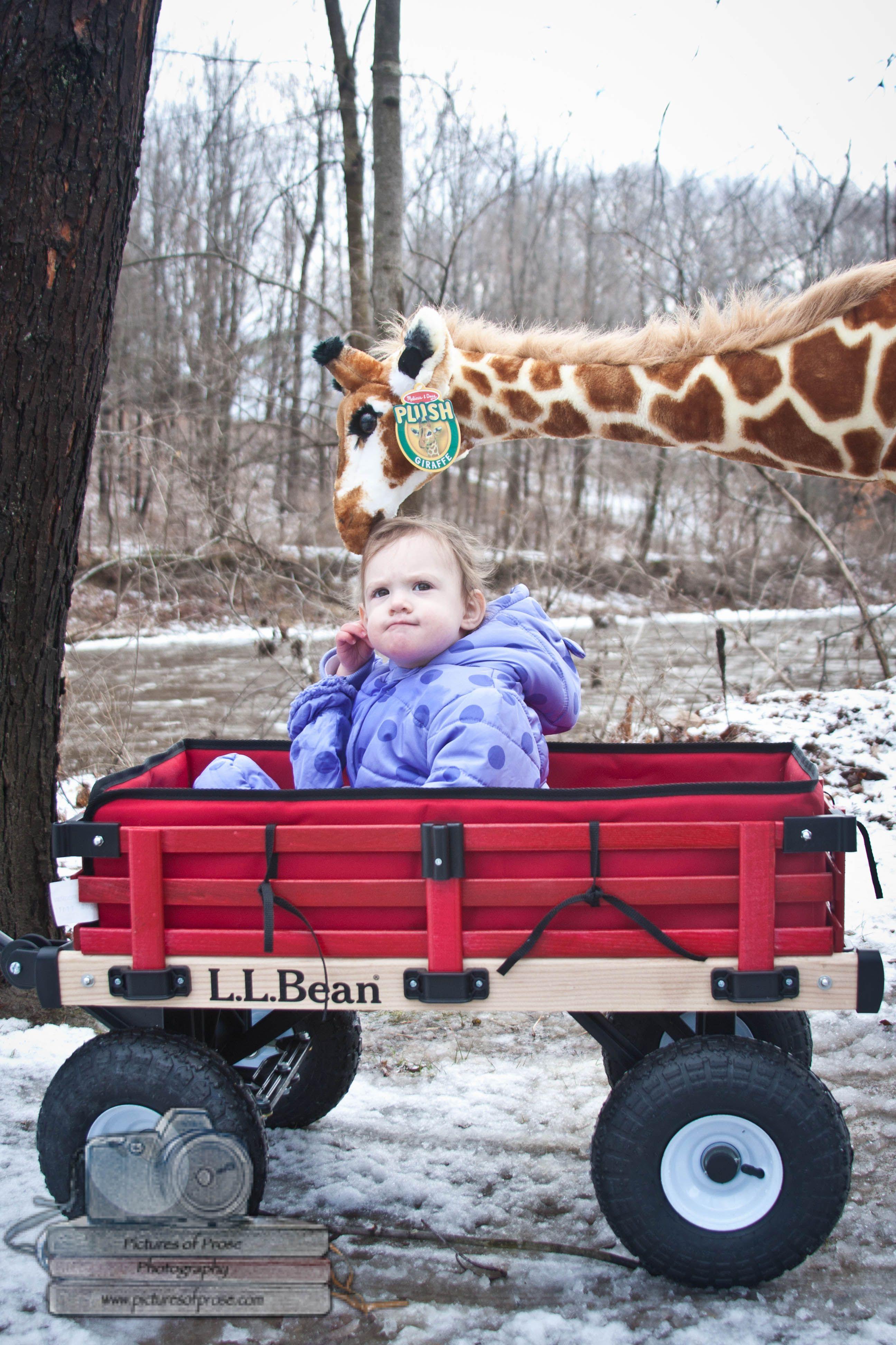 Giraffe in Maine