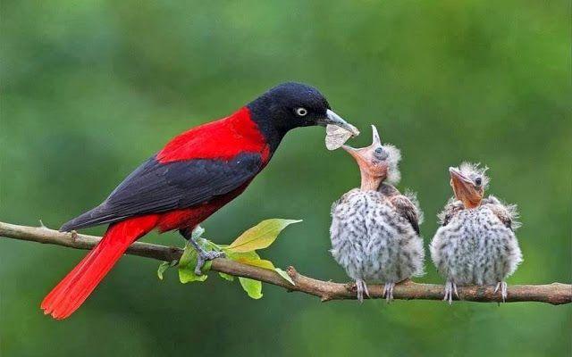 Google Con Imagenes Aves Exoticas Pajaros Hermosos Animales