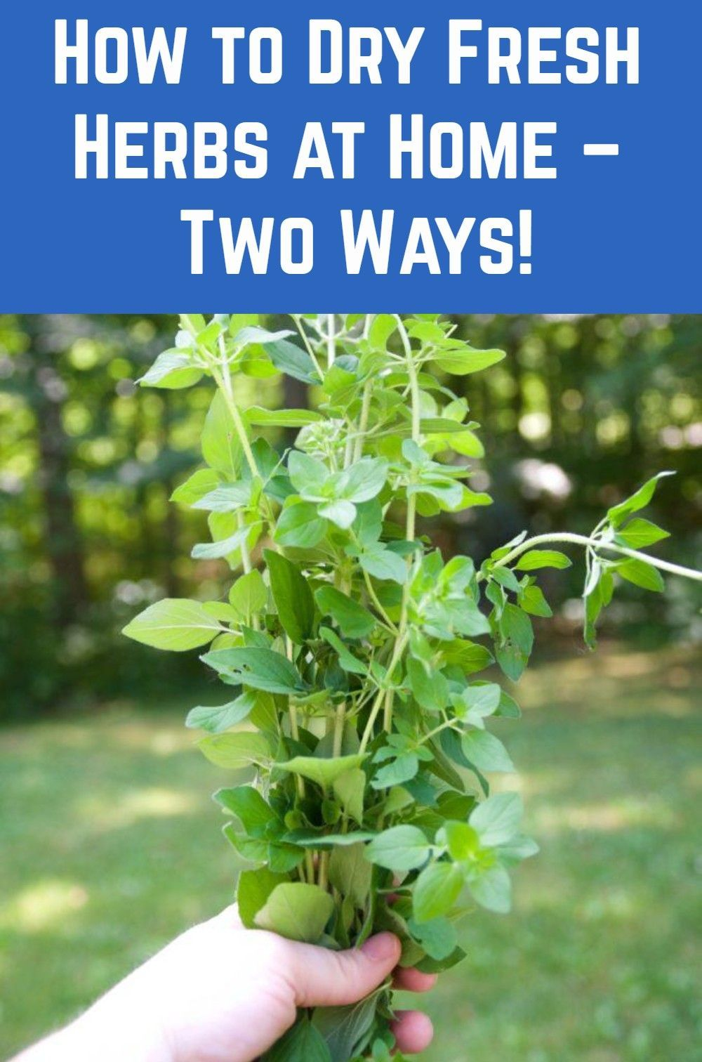 How To Dry Fresh Herbs At Home Two Ways Drying Fresh Herbs Herbs Asian Garden