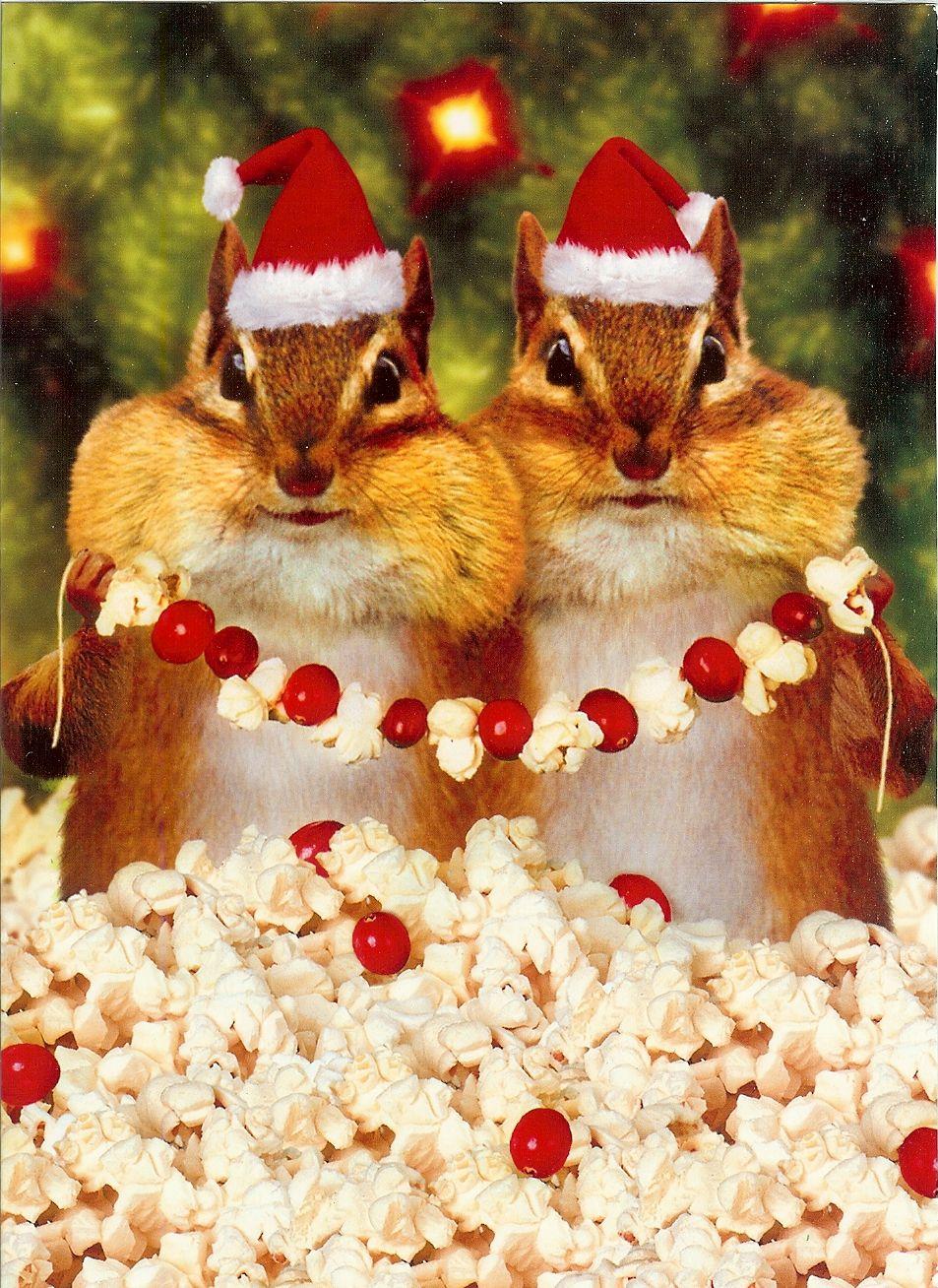 #funny, #chipmunk, #Christmas, #Holiday, #cute, #animal, #humor  Swag: http://www.cafepress.com/tlconline