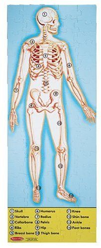 Pin By Mtc On Pour Neo Jouets Educatifs Puzzle Human Body Science Toys