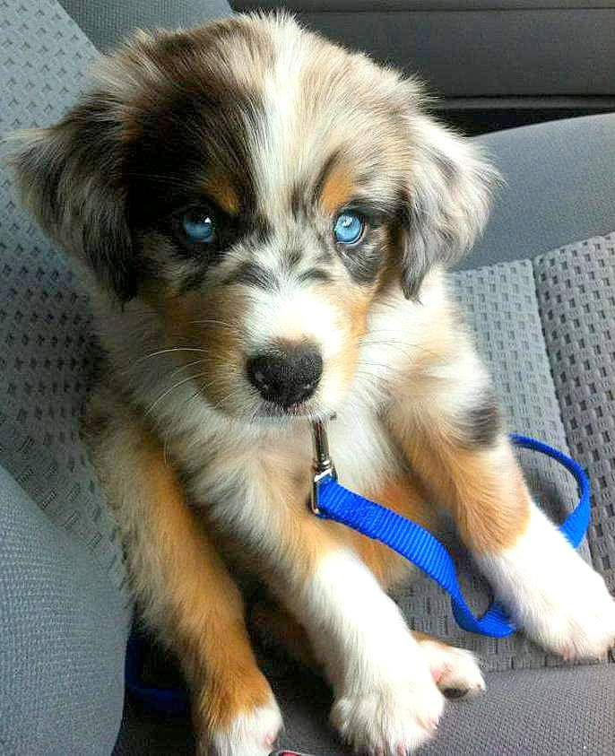 Dogs With Gorgeous Eyes Mixed Breed Puppies Cute Dogs And