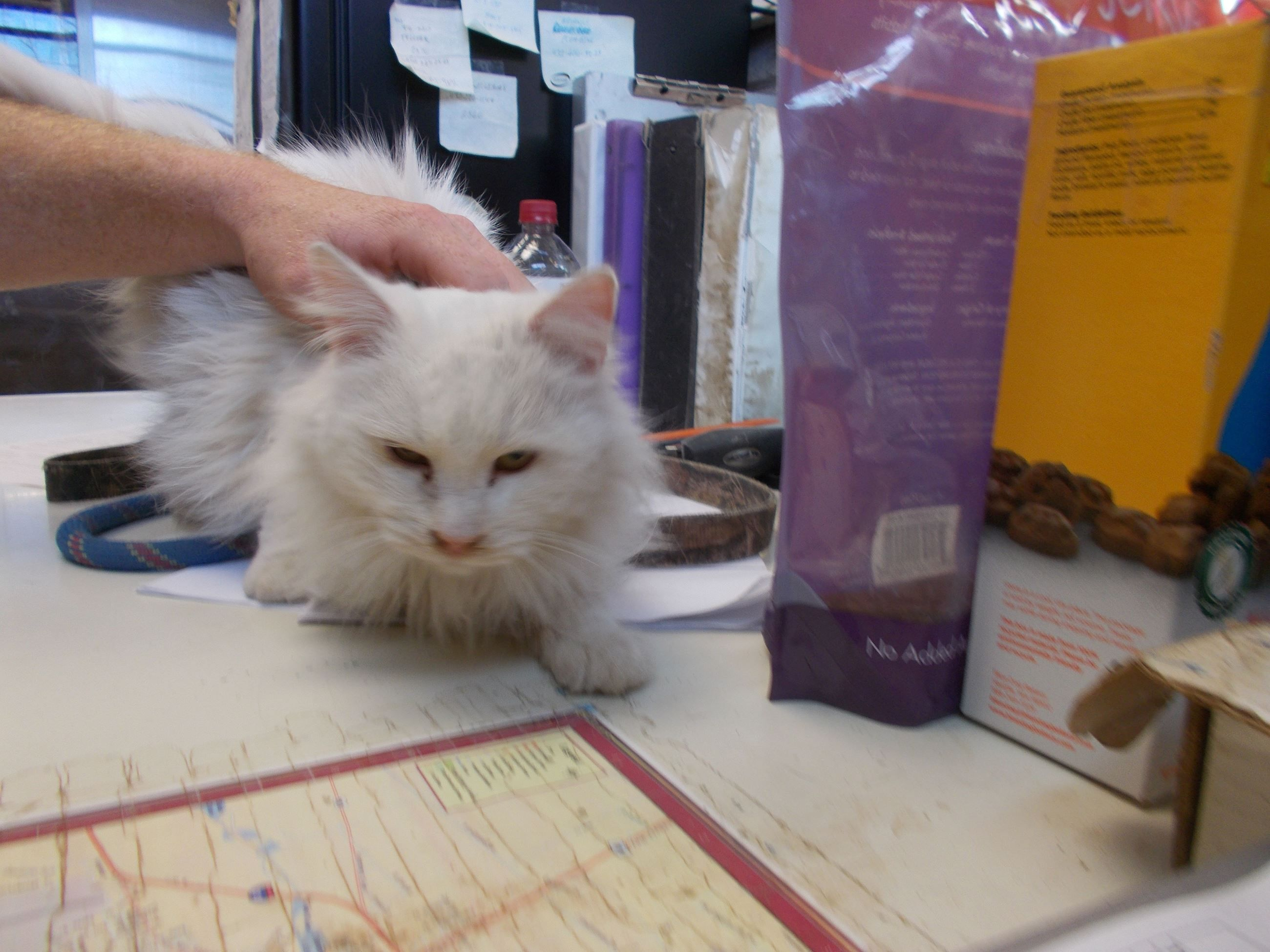 C7 dscn3482 animal shelter animals cute animals