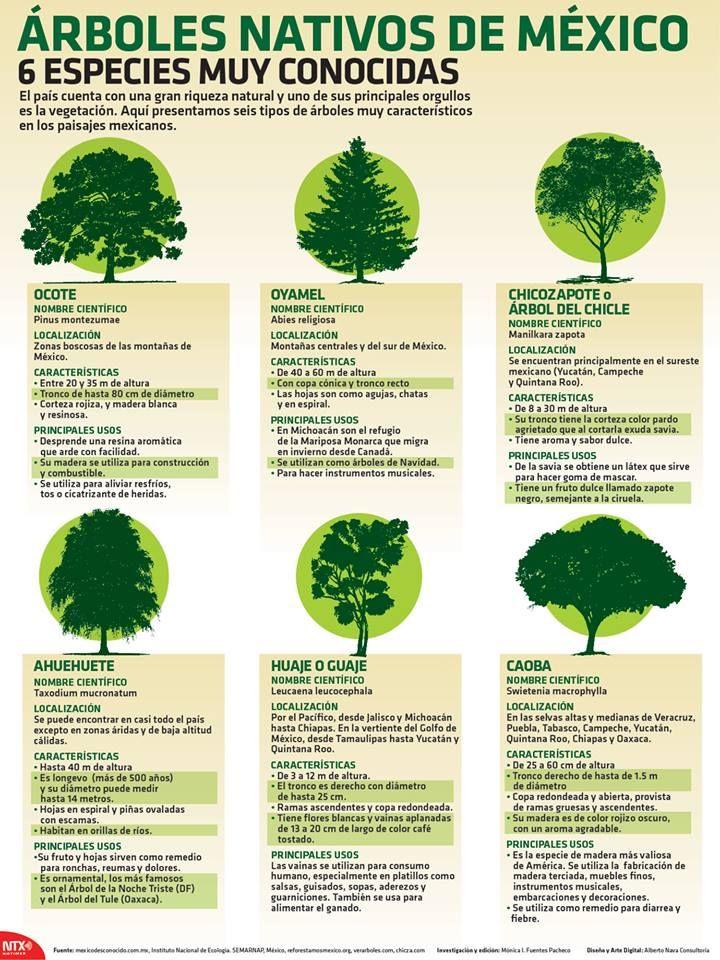 Arboles nativas de m xico rboles pinterest for Tipos de arboles y sus caracteristicas