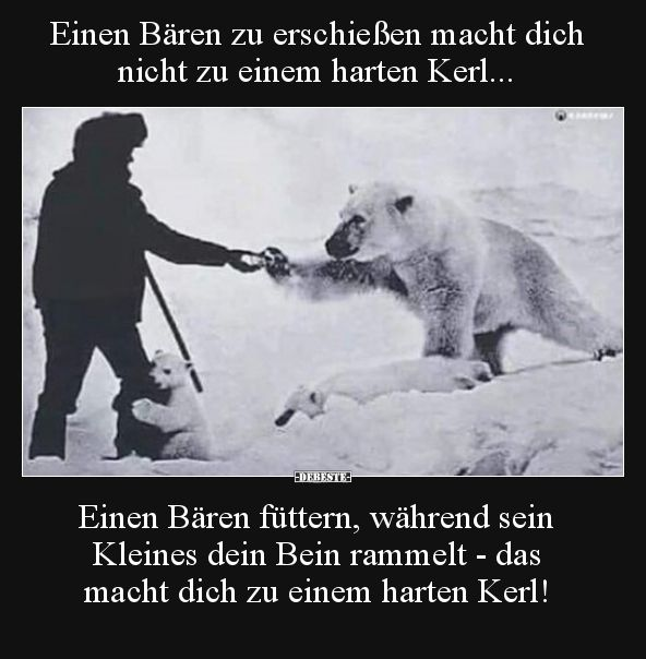 Einen Bären zu erschießen macht dich nicht zu einem harten.. | Lustige Bilder, Sprüche, Witze, echt lustig