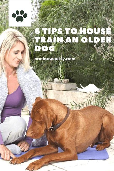 Dog Training High Five Dog Training Yoga Dog Training 80015