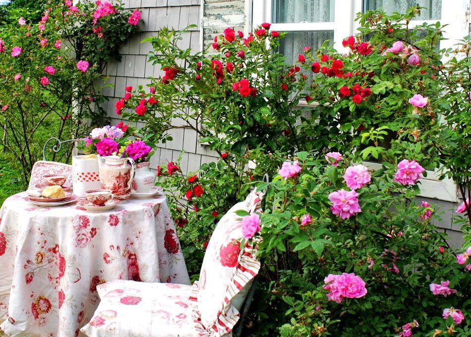 фотографии фото чайная роза в саду халаты