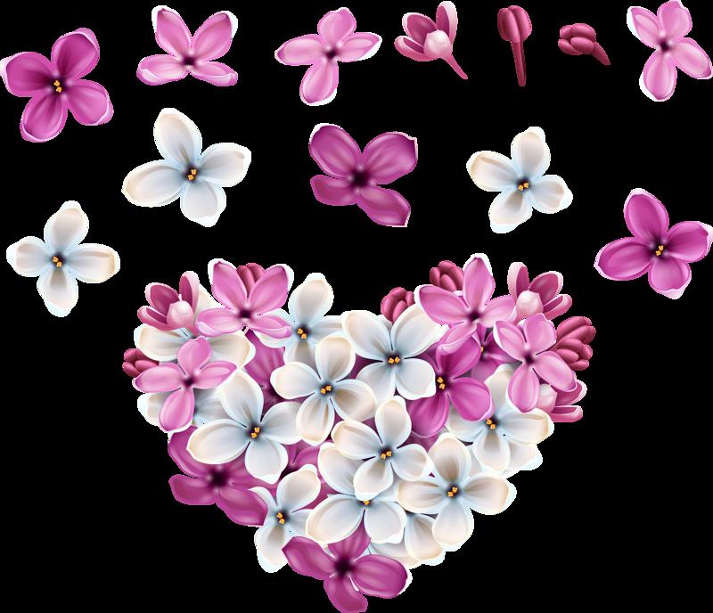 картинка много цветов на прозрачном фоне