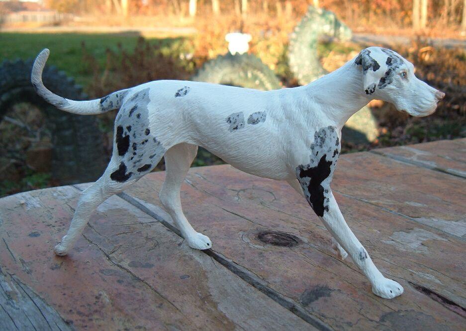 Great Dane Mismarked Harlequins Great Dane