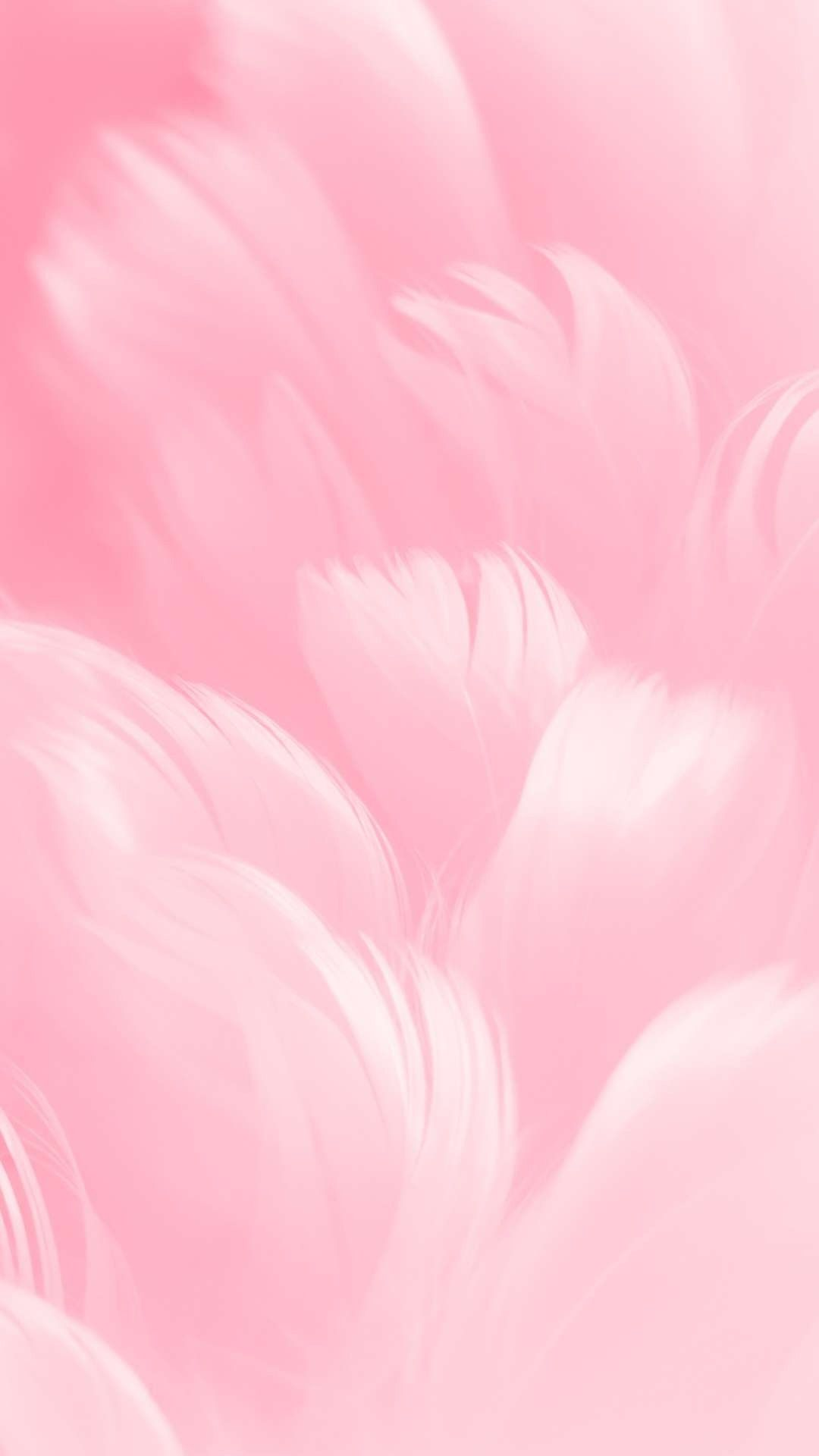 Pink Feathers Hd Pastel Pink Wallpaper Feather Wallpaper Pink Wallpaper