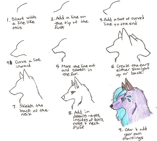 easy drawing tutorials wolf face drawing tutorial