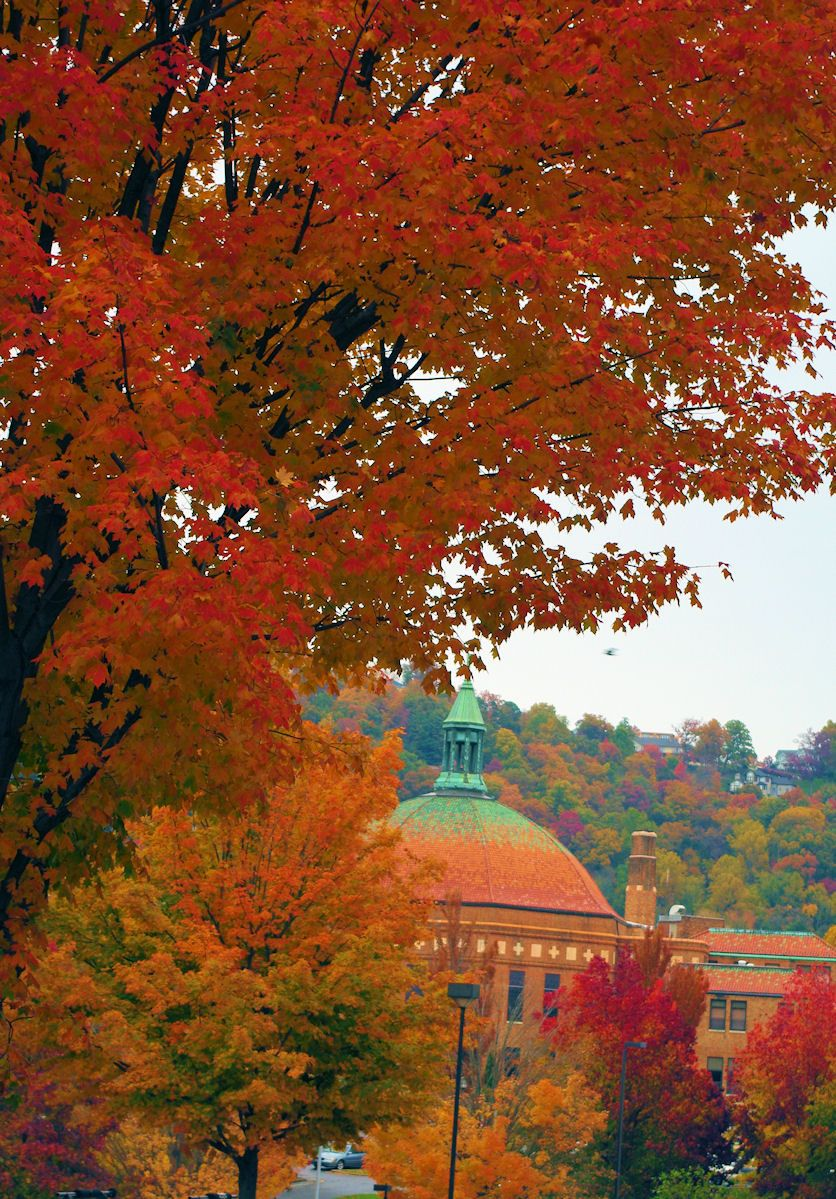Fall Color In Downtown Asheville NC. The Dome Is The Roof Of The First  Baptist