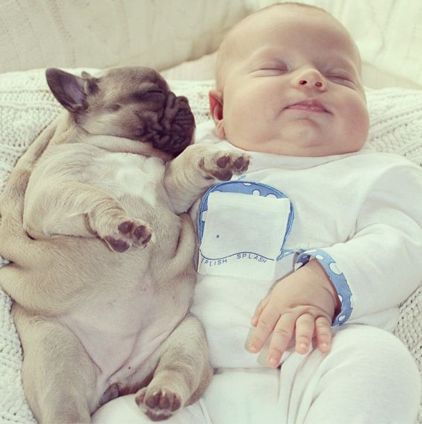 11 Incredibly Important Photos Of A Baby Covered In French Bulldog