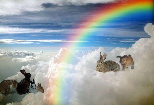 Rainbow Bridge Bunnies Rainbow Bridge Kittens And