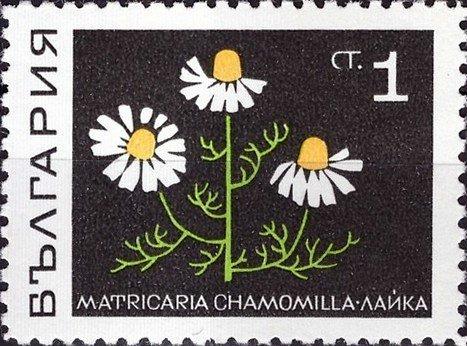 10 Unused Desert Postage Stamps  1969 Vintage Southwestern Desert Unused Stamps for Mailing