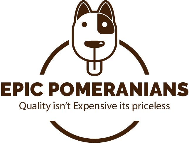 Available Puppies - Epic Pomeranians
