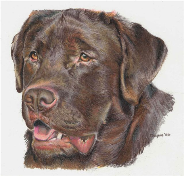 how to draw dog whiskers with colored pencils