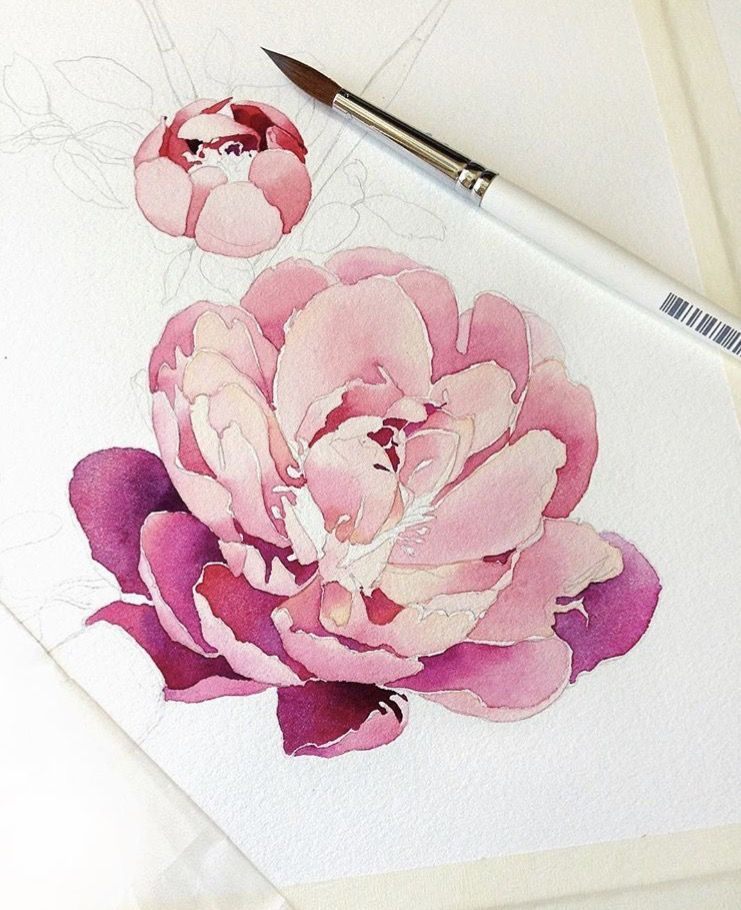 I Love The Depth In These Flowers Watercolor Peonies Flower