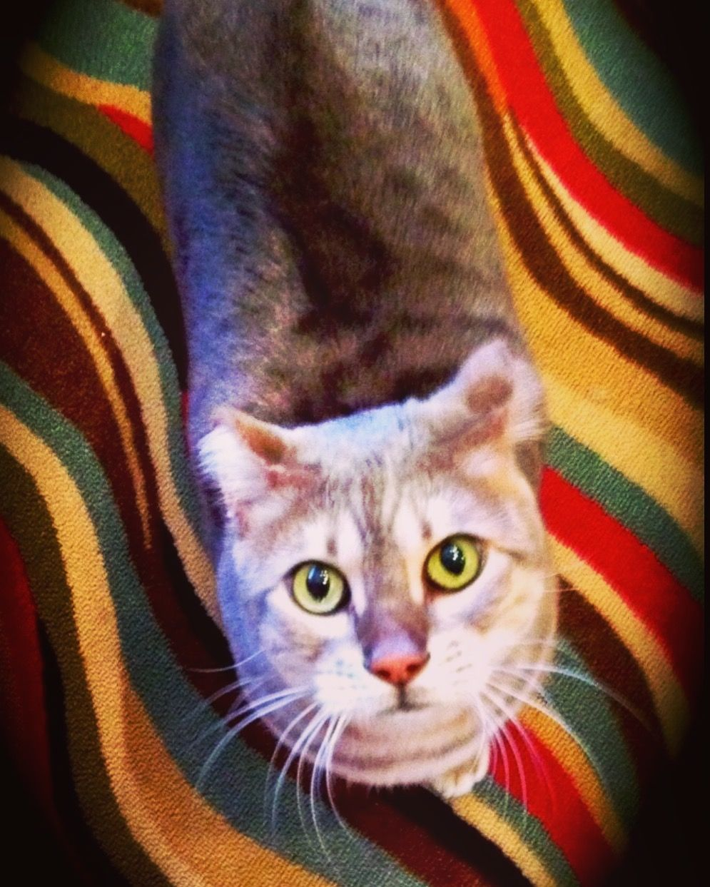 Pin by In Transition on Divine Canine Pet Sitting Cat