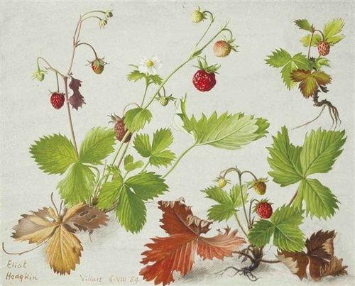 Eliot Hodgkin (English, 1905-1987), Wild Strawberries, 1954. Tempera on board, 5¾ x 7 in. (14.6 x 17.7 cm.)