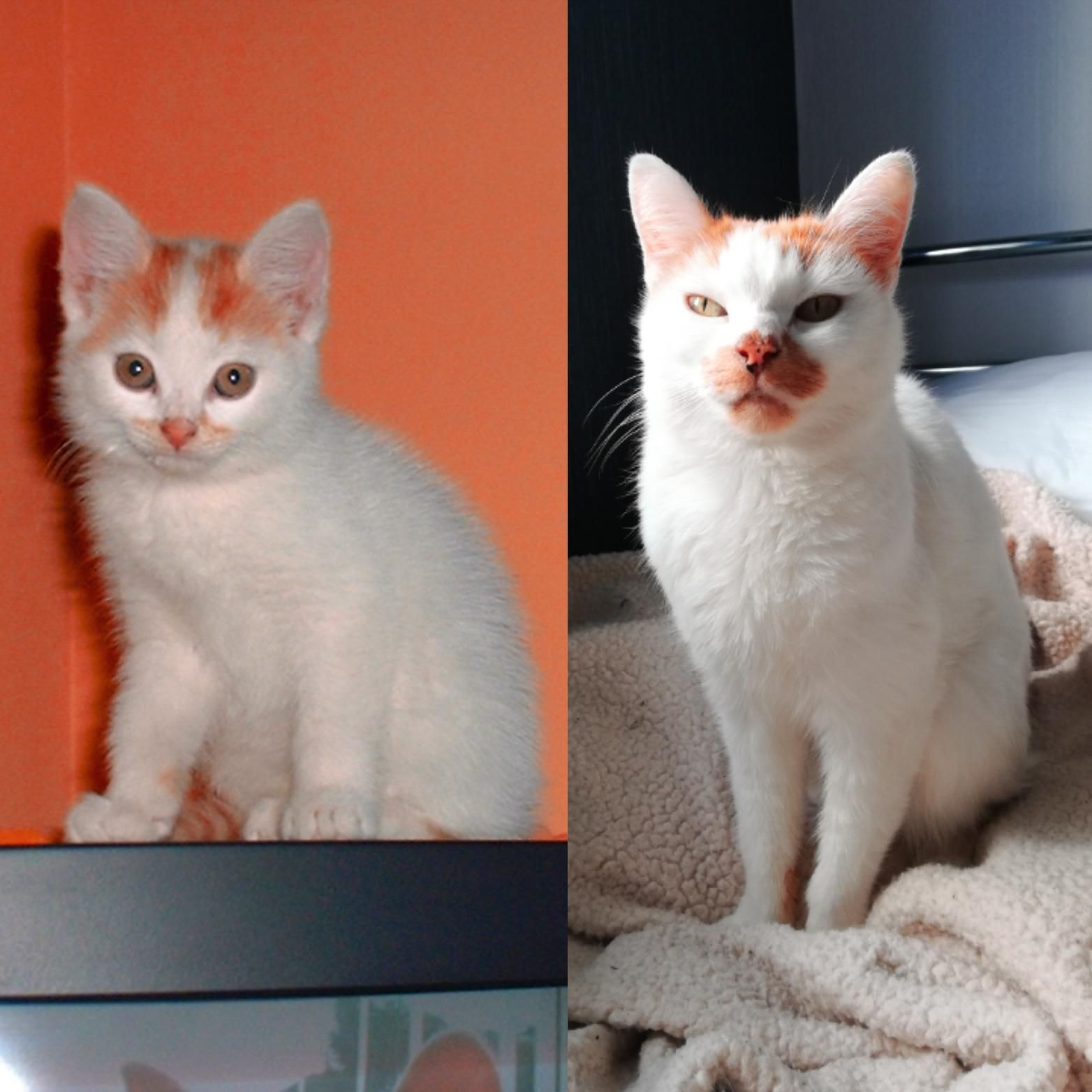 From Kitten To Age 14 My Cat Kimzie Cats Kitten Cat Lovers