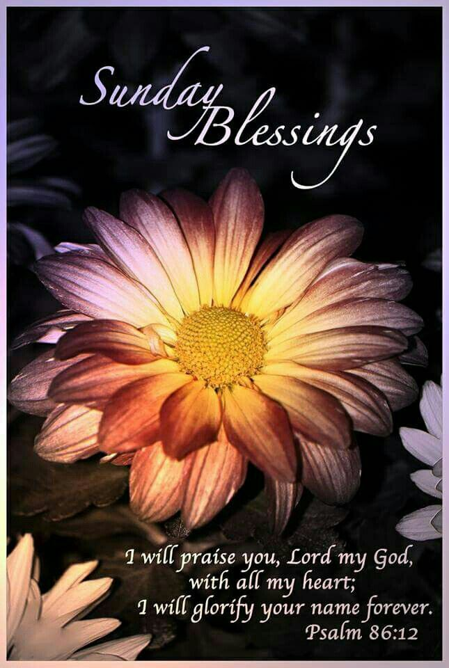 Beau Sunday Blessings Quotes Quote Days Of The Week Sunday Blessings Sunday  Quotes Happy Sunday Happy Sunday Quotes