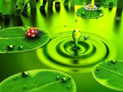 Cool 3d Wallpaper Hd For Desktop Widescreen Green Wallpaper Nature Wallpaper Ladybug Wallpaper