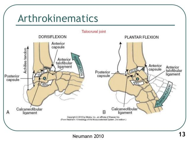 1 Biomechanics Of Ankle Joint Subtalar Joint And Foot Pilates