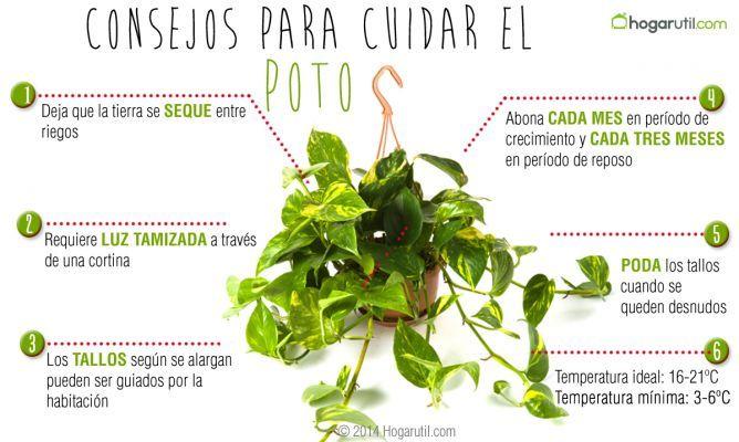 Cuidados del poto plantas pinterest las mejores for Cuidados del jardin
