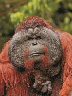 primates | Primates | Tour Categories | WWF