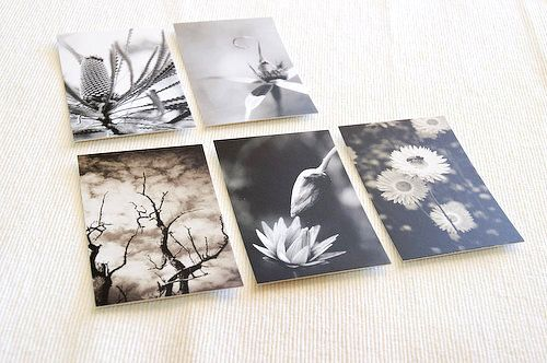 5 gift tag notecards flowers black and white mini photo print 5 gift tag notecards flowers black and white mini photo print plants australian nature photo reheart Choice Image