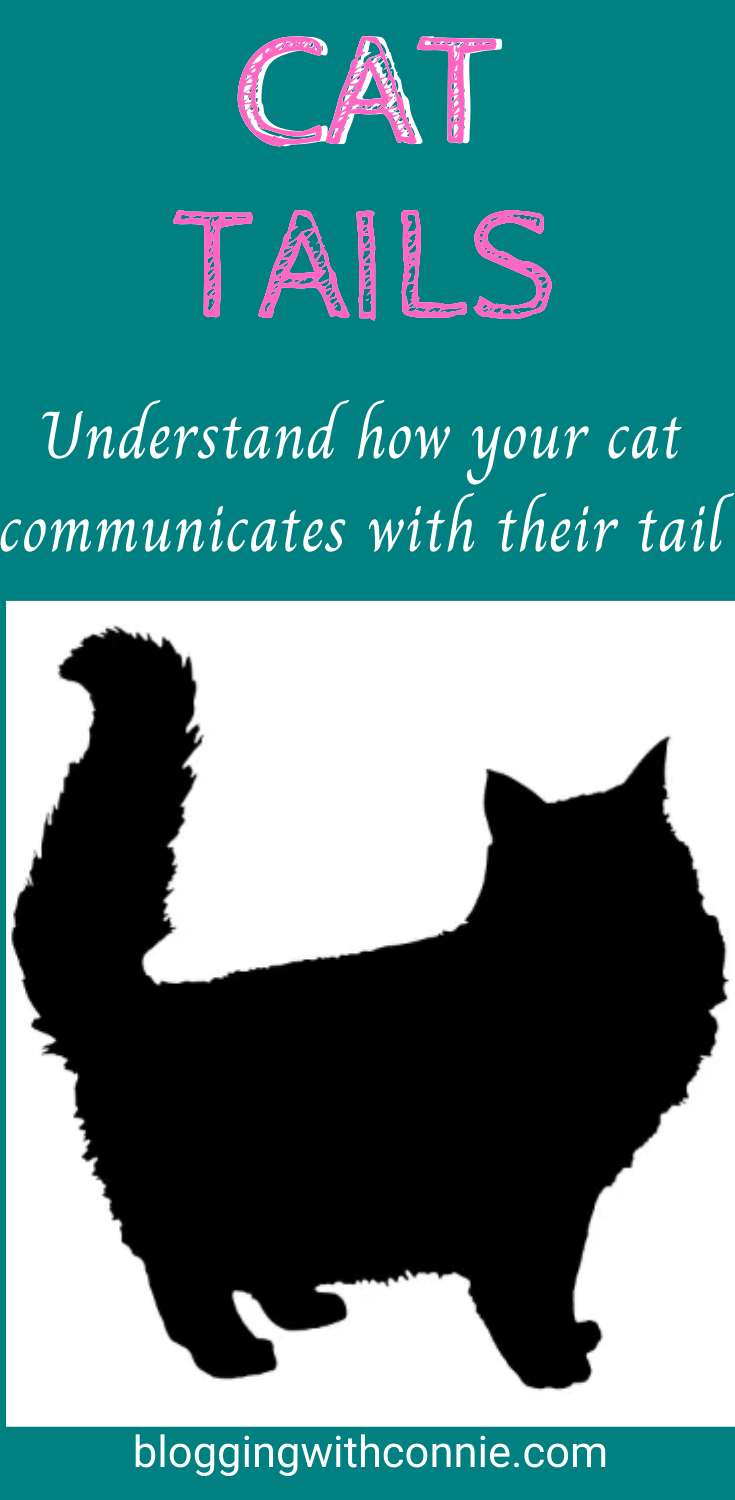 Cat Tails Understand Your Cat Tail Language Cat Tail Cat Tail Language Cats