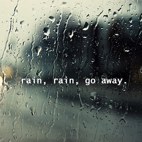 Funny Quotes About Rainy Days: Rainforest Trees And Shrubs