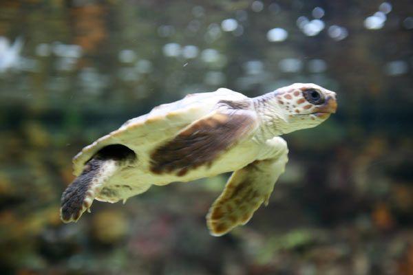 Bon Mercredi - Voici le 4e article de 5 dans la rubrique Reptiles.  Merci de vos visites sur mon site.  Bonne journée et bisous.