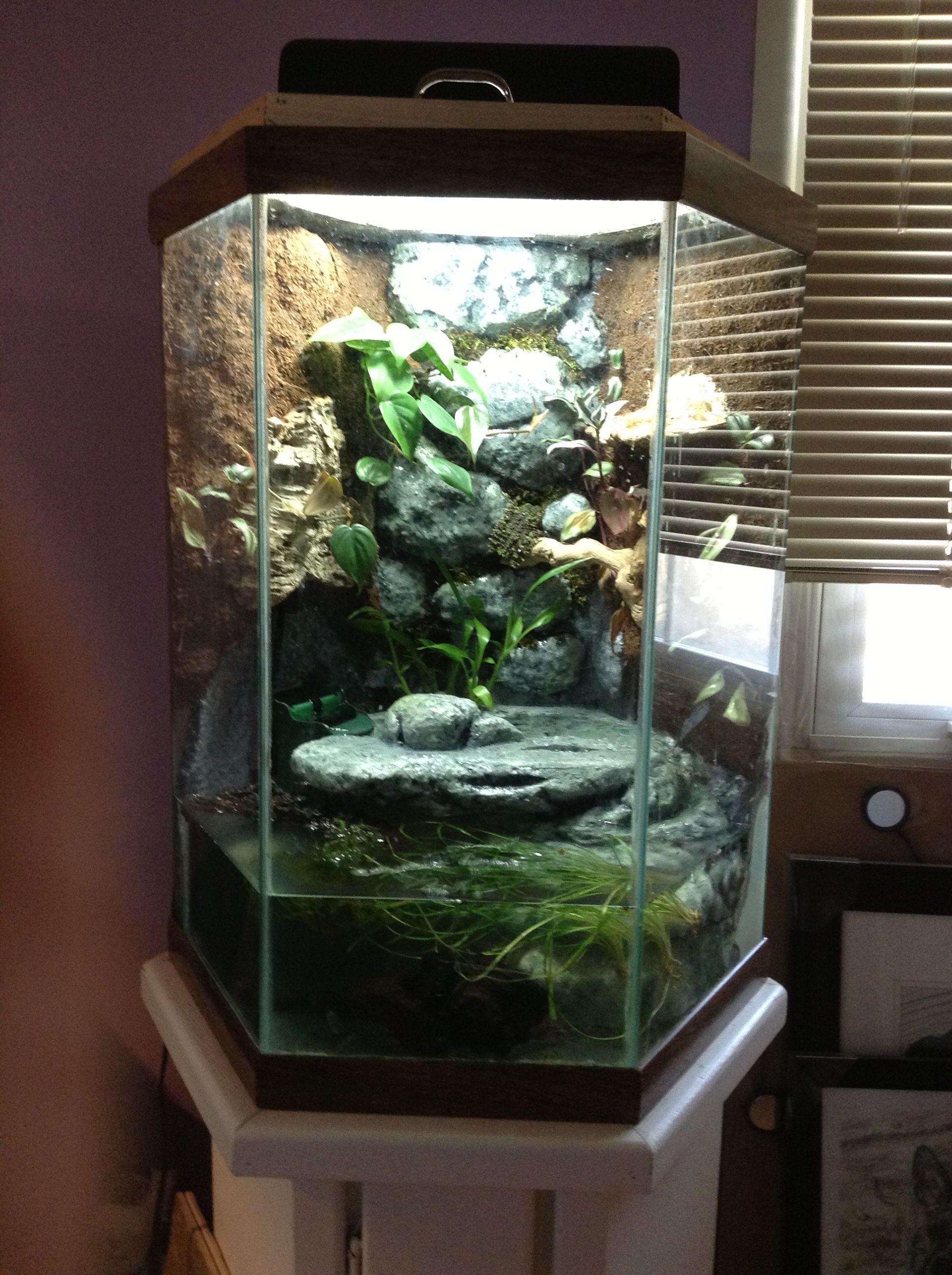 My Custom Made Frog Tank Diy Fish Tank Goldfish Tank