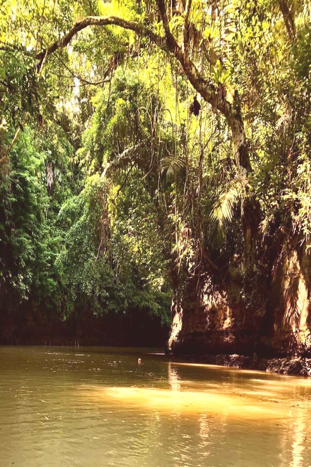 #treeplantoutdoornature #natural #wonder #hiding #behind #bushes #thick #trees #water #true #the #and #of #a A true Natural Wonder hiding behind the thick bushes and trees ofYou can find indonesia tra...