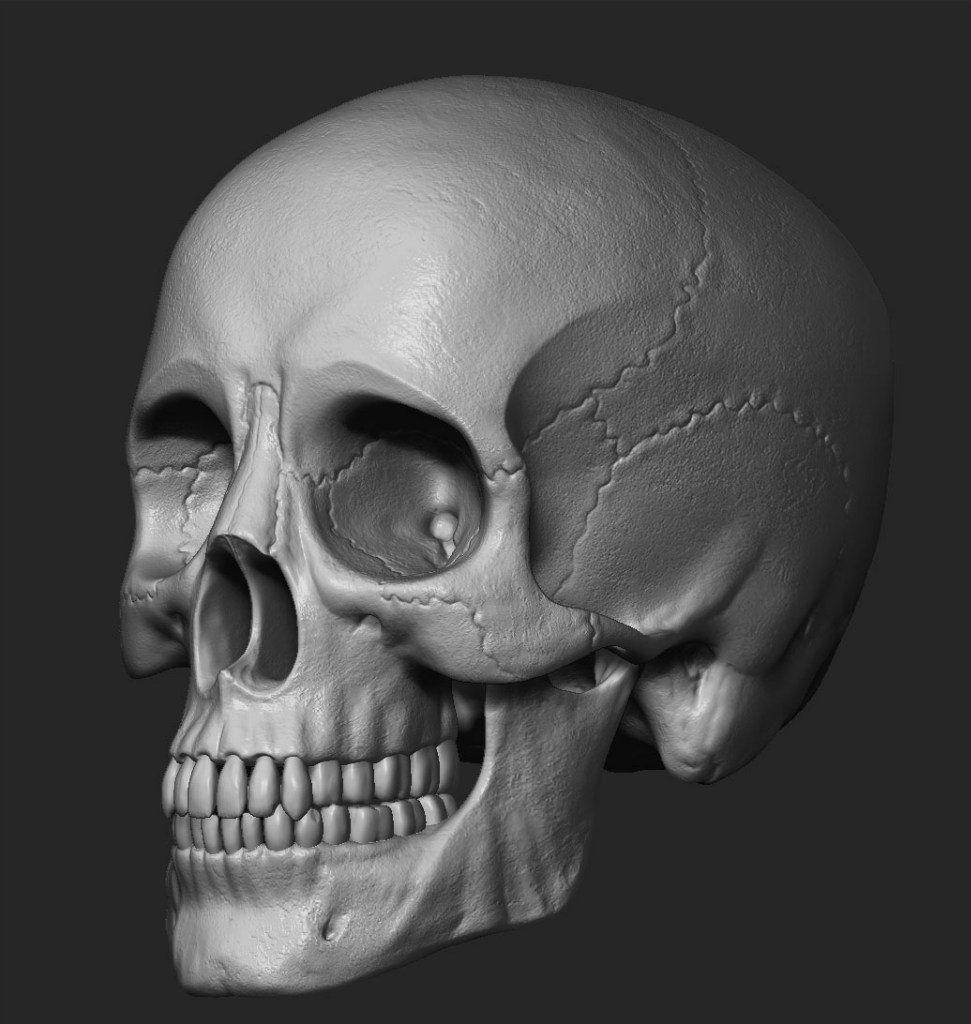 Человеческие черепа в картинках