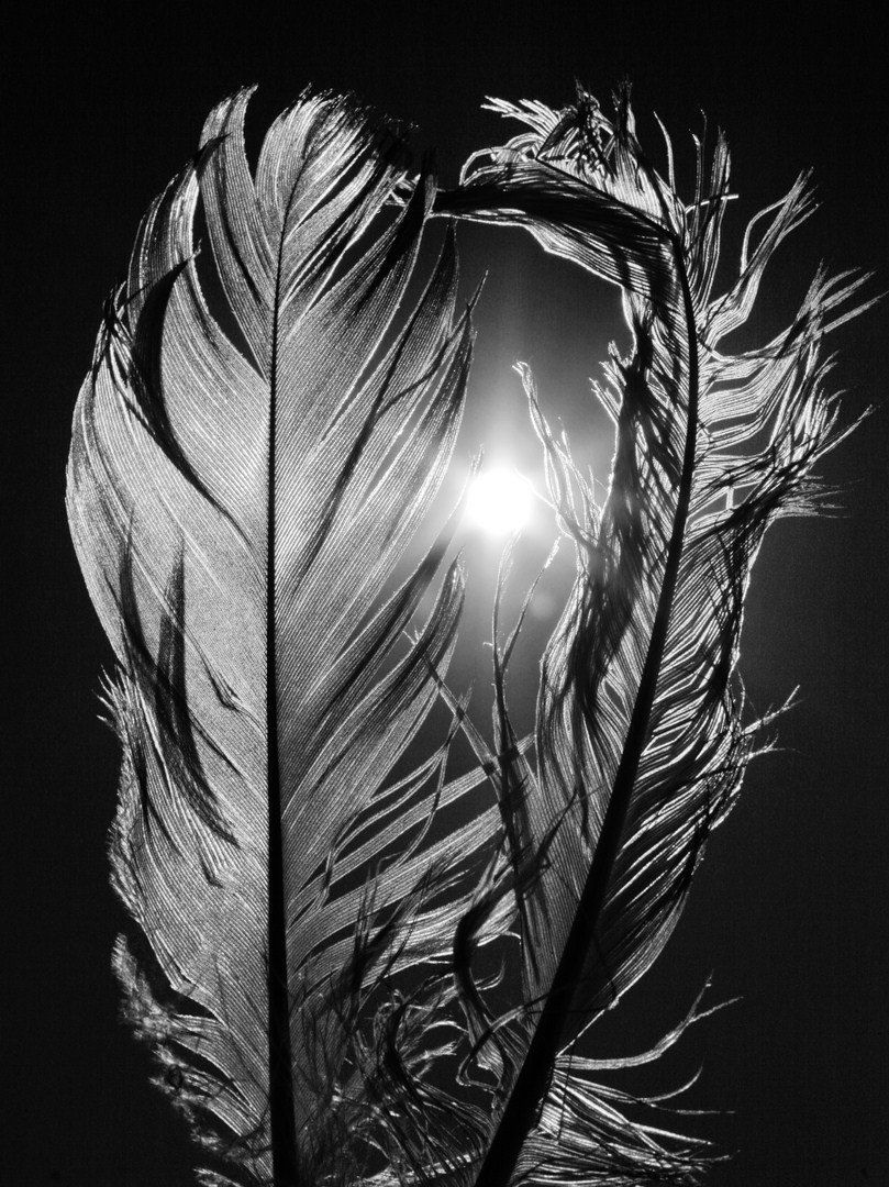 PHOTOGRAPH BLACK WHITE FEATHER BIRD BLACK FRAMED ART PRINT PICTURE B12X4788