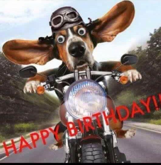 Funny Dog Driving Bike Happy Birthday Motorcycle Happy Birthday
