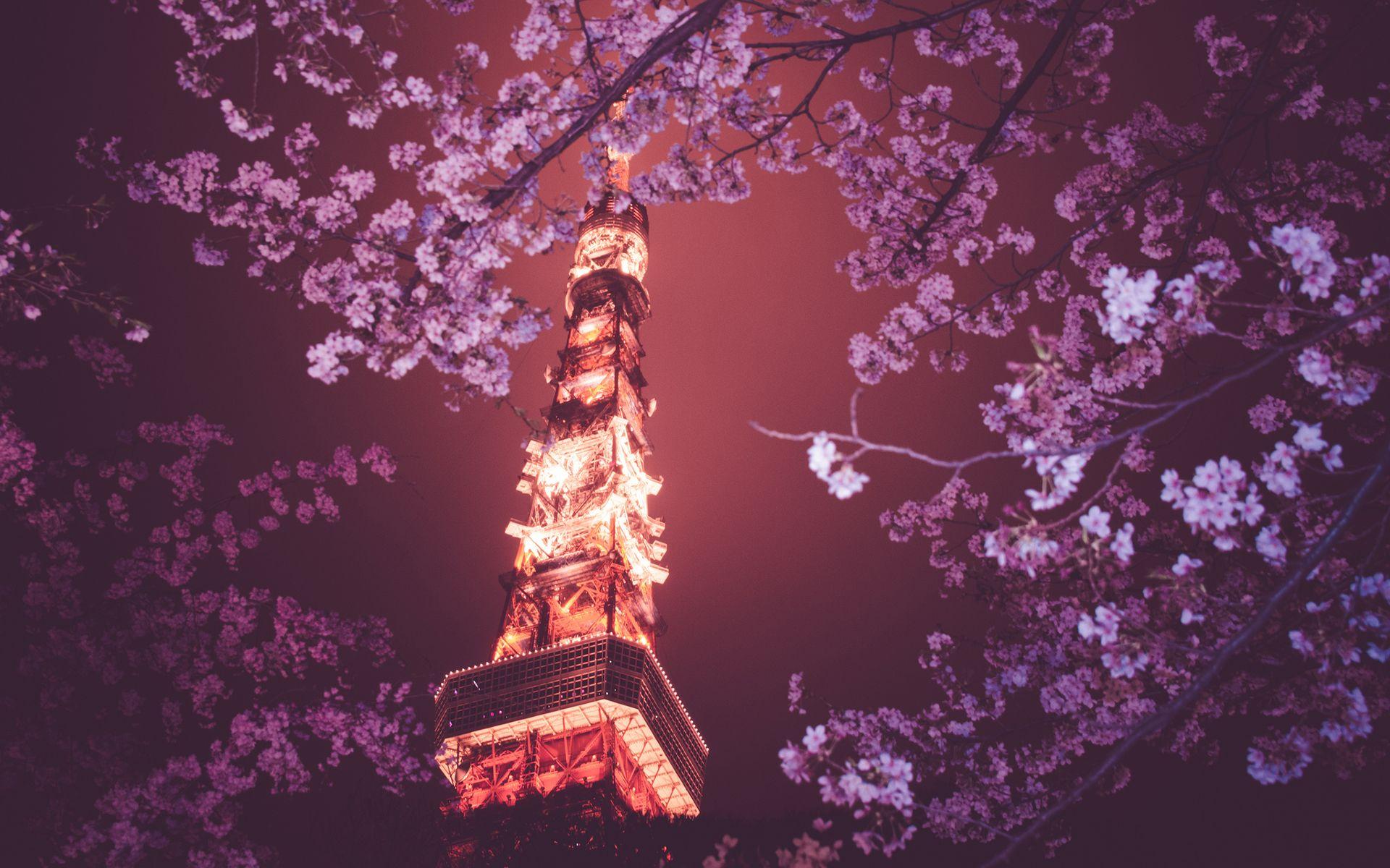 Tokyo Tower Tokyo Cherry Blossom Tree Flowers Night Lights Tokyo Tower Tower Tokyo Night