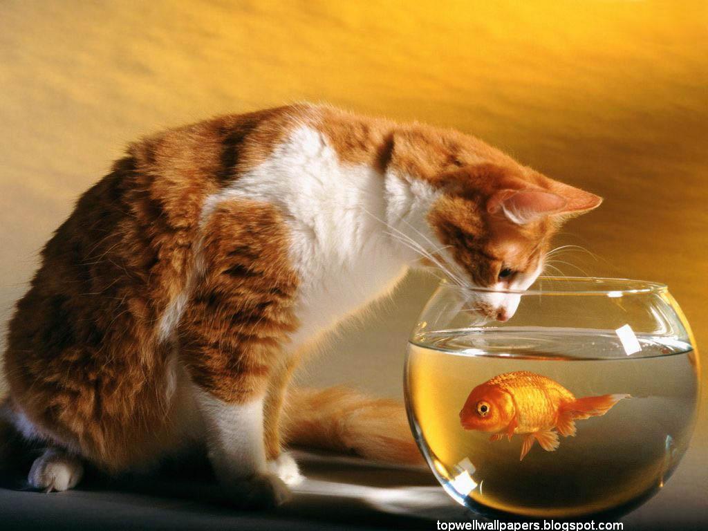red fish/cat