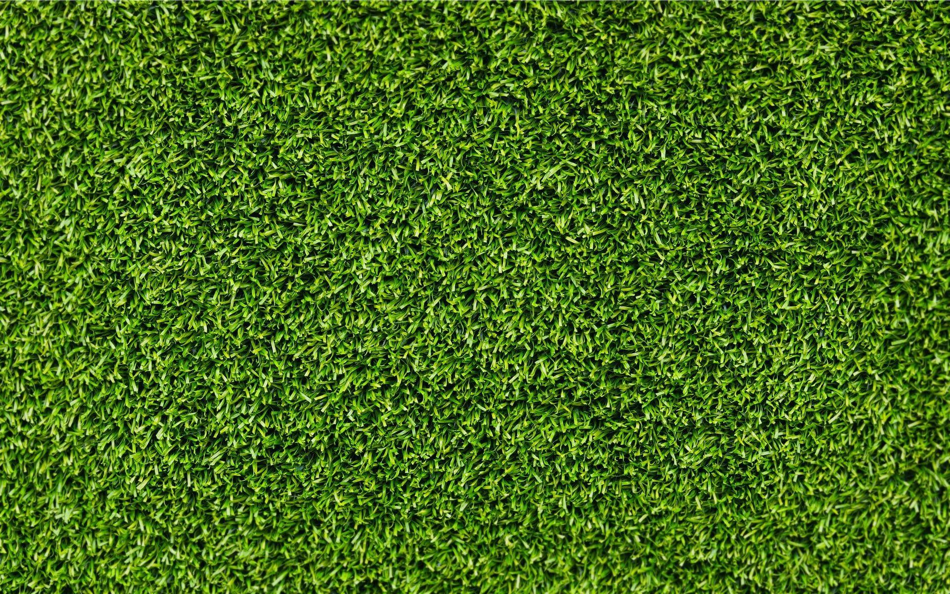 Green Grass Grass Texture 1080p Wallpaper Hdwallpaper Desktop In 2020 Grass Textures Grass Background Grass Vector